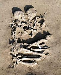 A pair of human skeletons lie in an eternal embrace.
