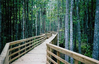 Boardwalk on the Wolf River